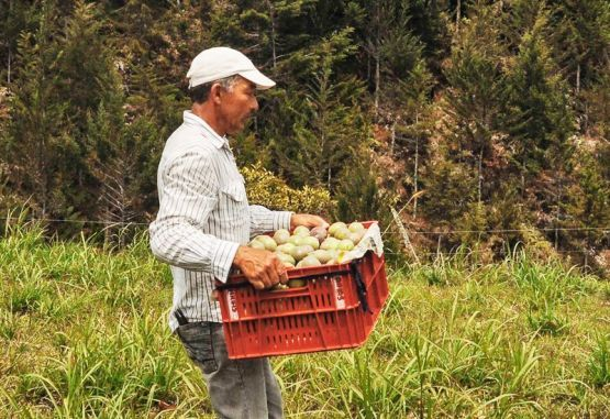 Productores agro