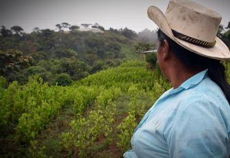 Familias cocaleras firmaron acuerdo para sustituir cultivos ilícitos