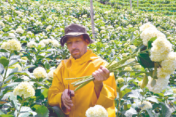 San valent n se llena de hortensias - Cuidados de las hortensias ...