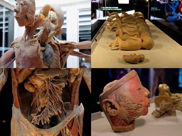 Bodies muestra de cuerpos artisticos
