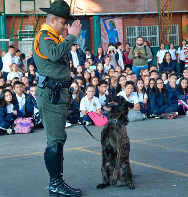 Caninos en colegios de Itagui