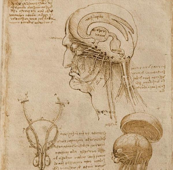 Cerebro dibujado por Da Vinci