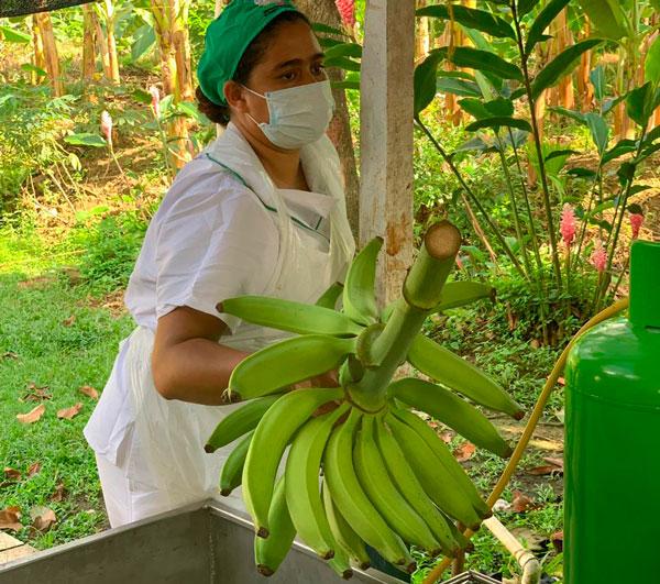 Embarque del plátano