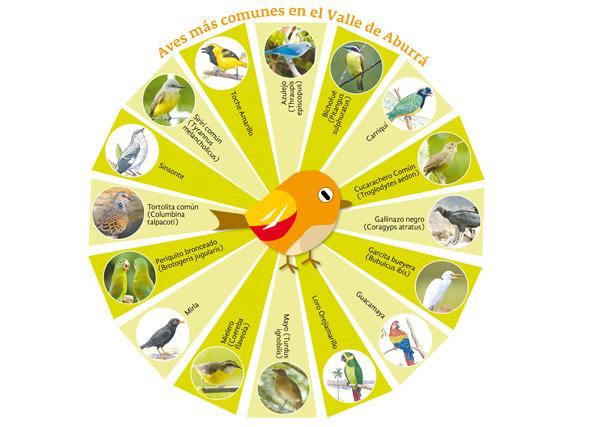 Aves mas comunes en el Valle de Aburrá