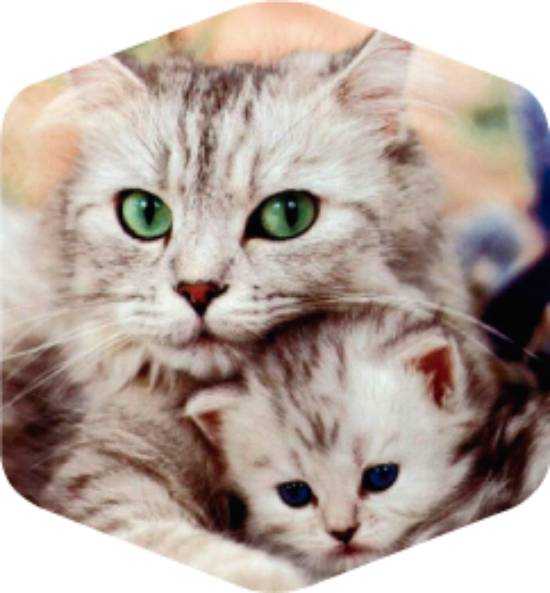 Febrero mes del gato
