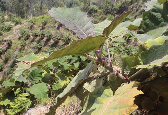 Municipios de Antioquia apuestan aladiversificación agrícola