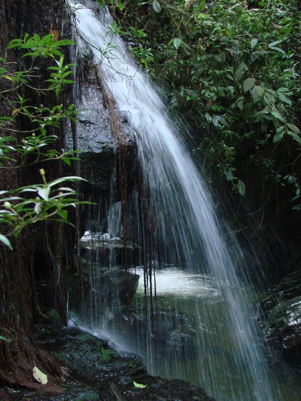 Por el encierro preventivo de la población se observan cambios en la calidad del agua.