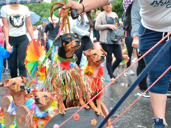 desfile de mascotas en Feria de las Flores