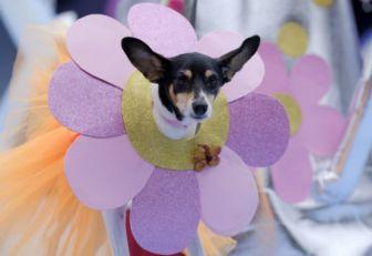 Los perros también celebran su Carnaval en Río