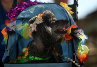 Carnaval deRío de Janeiro en contra del maltrato animal